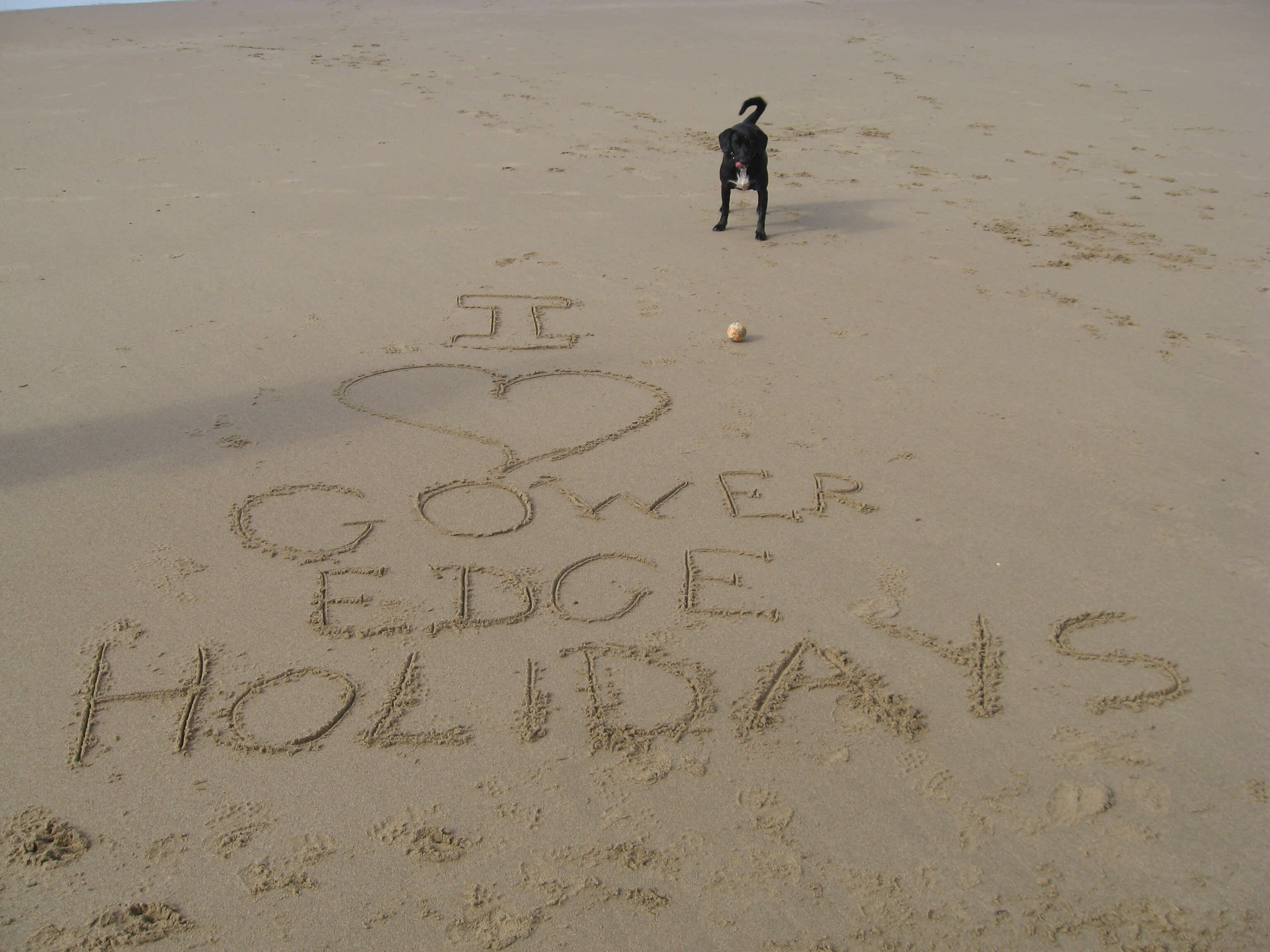 Rush, our dog, advertising Gower Edge Holidays on the beach
